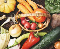 世界一受けたい授業北海道野菜
